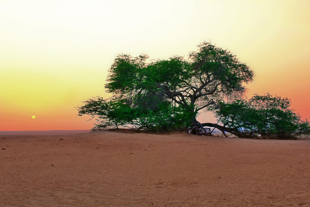 The Tree of Life or Shajarat-al-Hayat near Askar