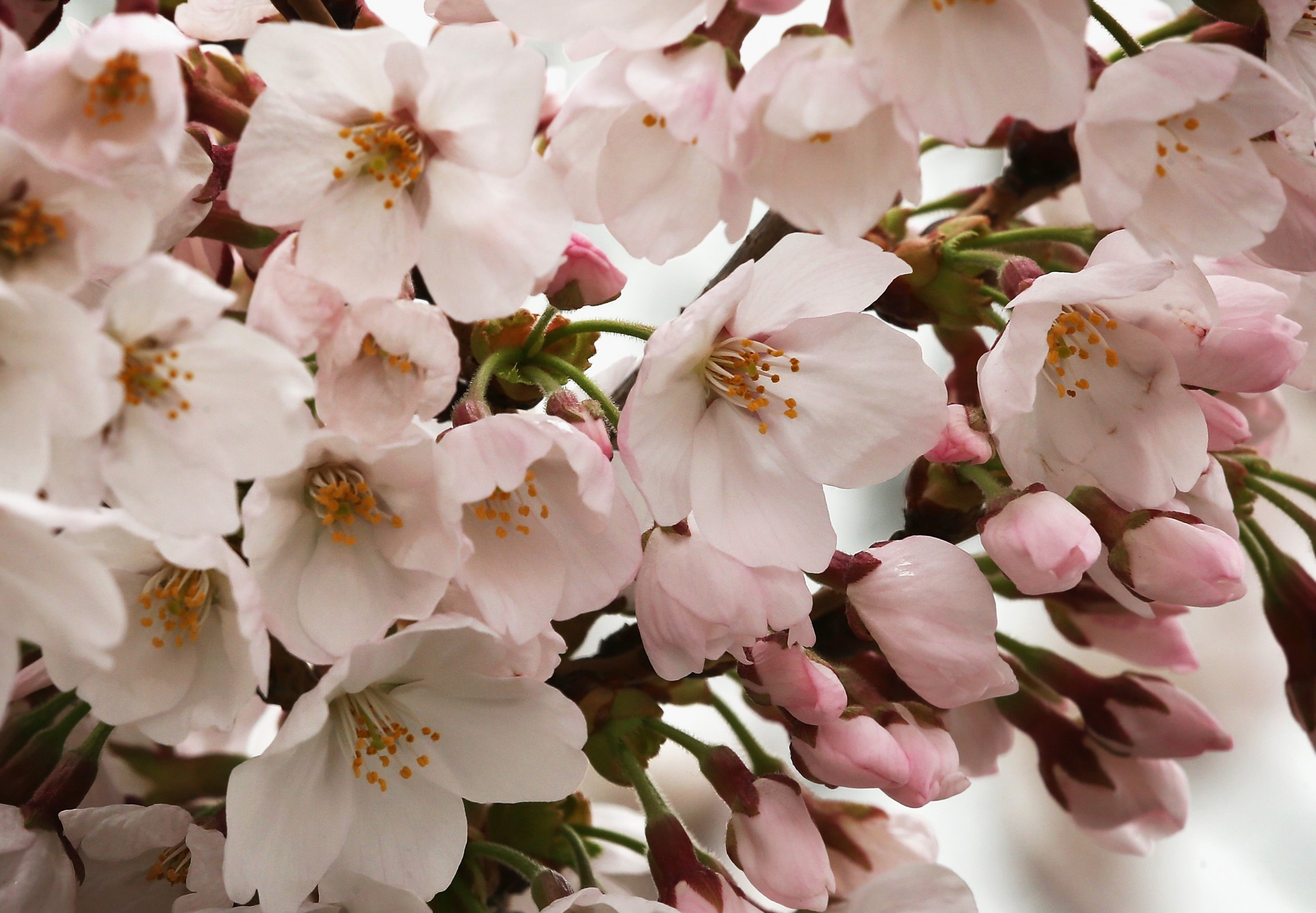 Beauty Pick: Spring Floral Fragrances