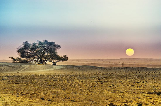 The Beauty of Bahrain